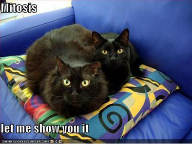 Mitosis lolcat